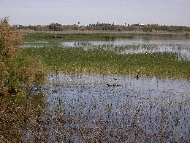 Reserva-Ornitologica-de-LOS-CHARCONES